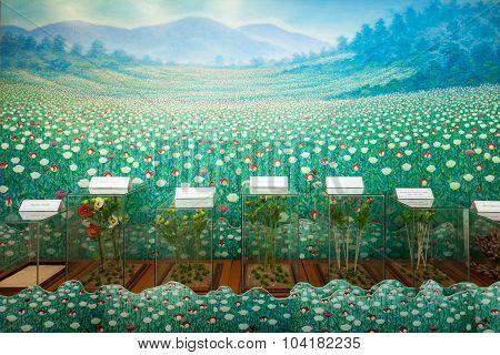 Hall Of Opium Museum