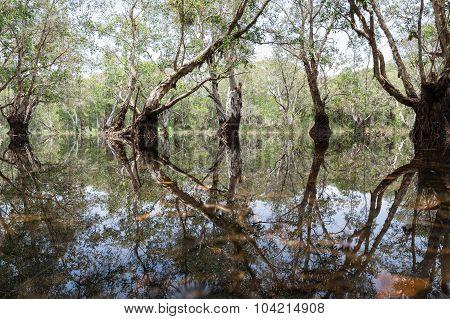 Forest in wetland Wetland botanical garden Rayong Thailand