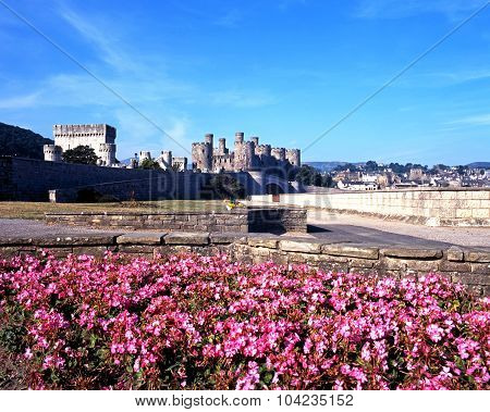 Conwy Castle and Flowerbed.