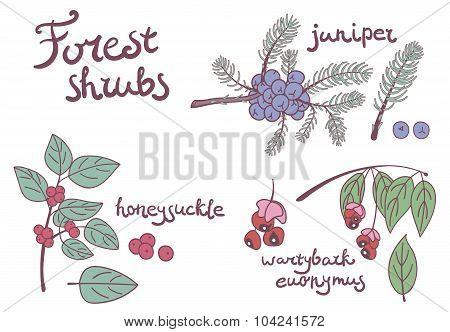 Forest set of wild shrubs