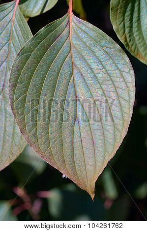 Close the leaf area