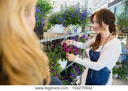Salesgirl showing fresh flower plant to female customer in shop