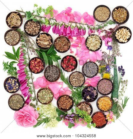 Medicinal flower and herb selection of summer used in alternative herbal medicine over white background.