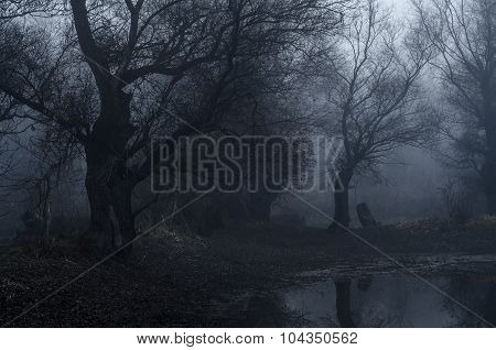 Spooky Old Forest On Cold Winter Day