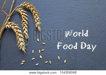 World Food Day October 16 chalkboard with rye and grain and handwritten words poster