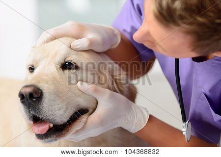 Professional vet examining a dog