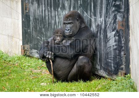 Grandpa monkey with baby monkey