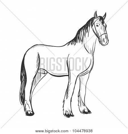 doodle horse