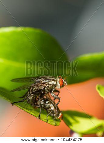 Flies Are Breeding