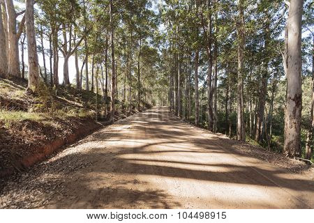 Straight Dirt Road going uphill under the shade of a tree canopy  created by trees that stretches from both sides of the road making a colorful display of shades on the road surface poster