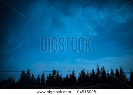Forest Of Pine Trees Under Blue Dark Night Sky