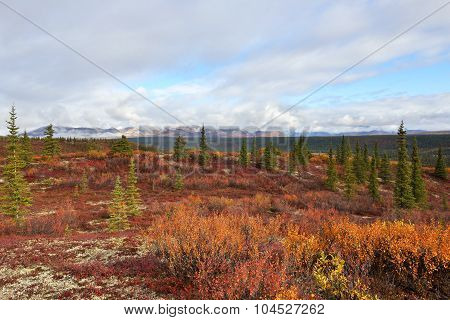 Autumn On Denali Hwy, Alaska