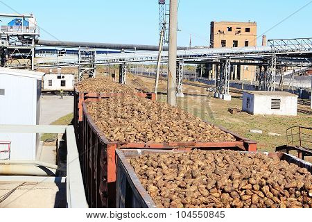 Freight Wagons With Sugar Beets On The Railroad At Beet Sugar Plant