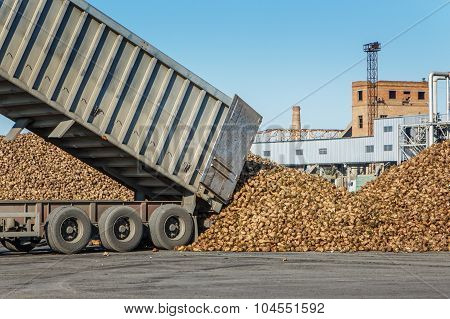 Sugar Beet Harvest - Truck Waiting In Front Of Off-loaded Beet