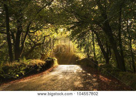 Old stone bridge in trees