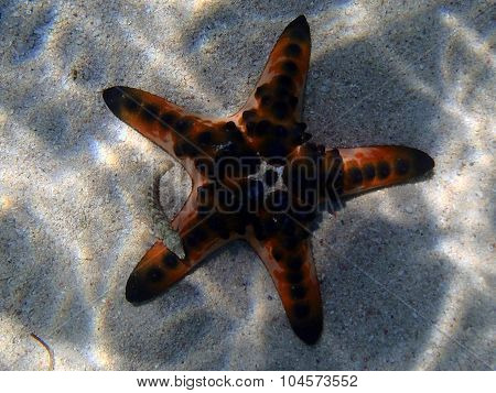 Underwater Marine Life On A Shallow Seabed With Starfish And Reef Fish