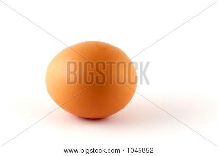 Egg - Isolated