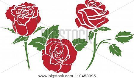 Set Of Roses