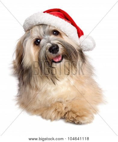 Cute Happy Christmas Havanese Dog In A Santa Hat