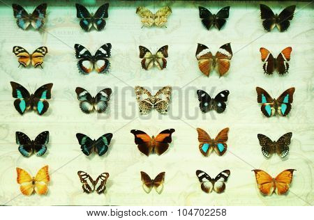Butterfly collection set