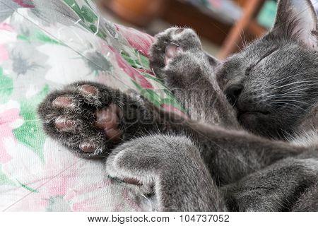 Close up grey cat sleeping, selective focus