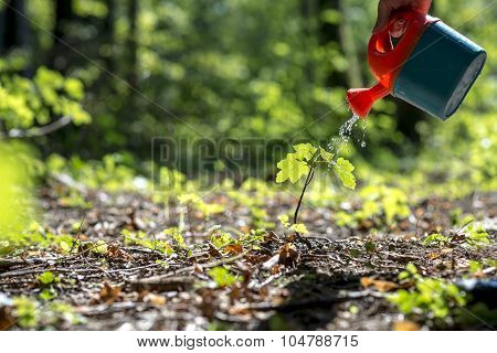 Male Hand Watering A Young Plant In The Middle Of Forested Area