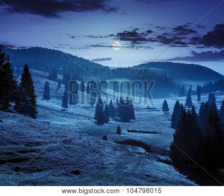 Fog On Forest In Mountains At Night