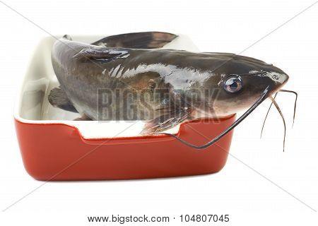 Channel Catfish In A Ceramic