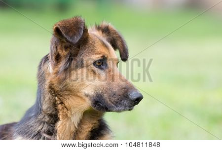 Cute Dog Portrait