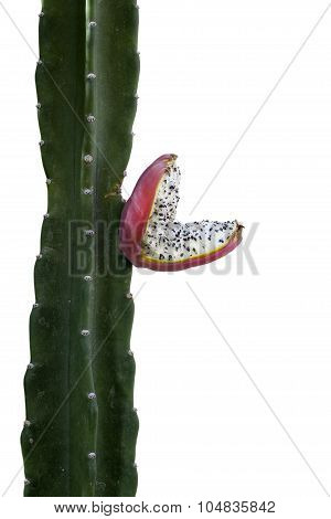 Cactus Fruit with Seeds