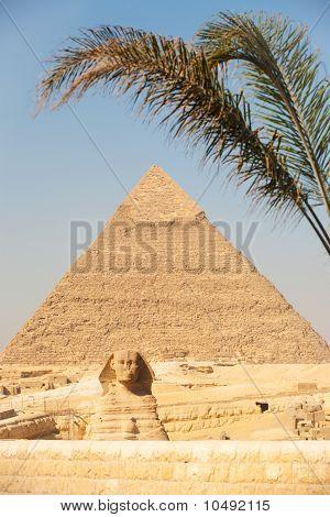 Giza Pyramid Entrance Sphinx Khafre Palm