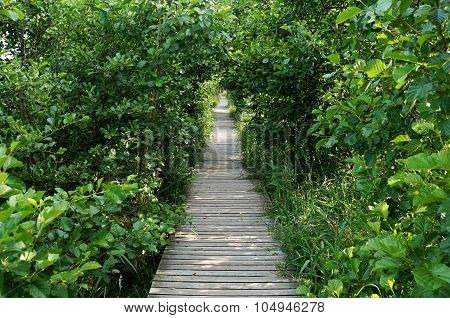 Wooden walkway leading into endlessness