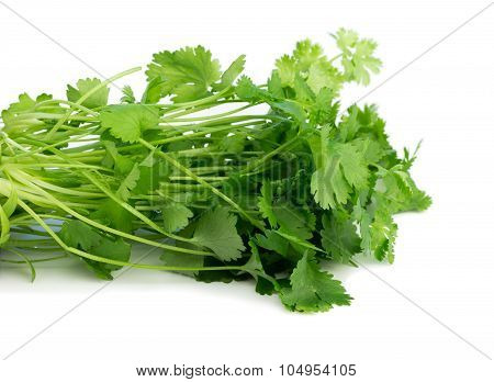 Coriander, also known as cilantro, isolated on white