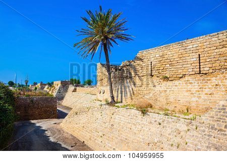 Deep protective moat around the ancient Caesarea, Israel. Lone palm tree growing on the rocks