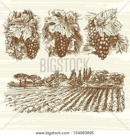 vineyard, farm, grapes - hand drawn collection