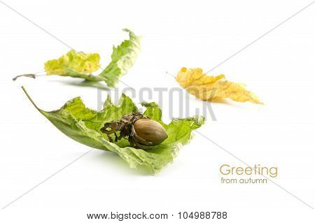 Hazelnut And Dry Leaves Isolated On White, Greeting From Autumn