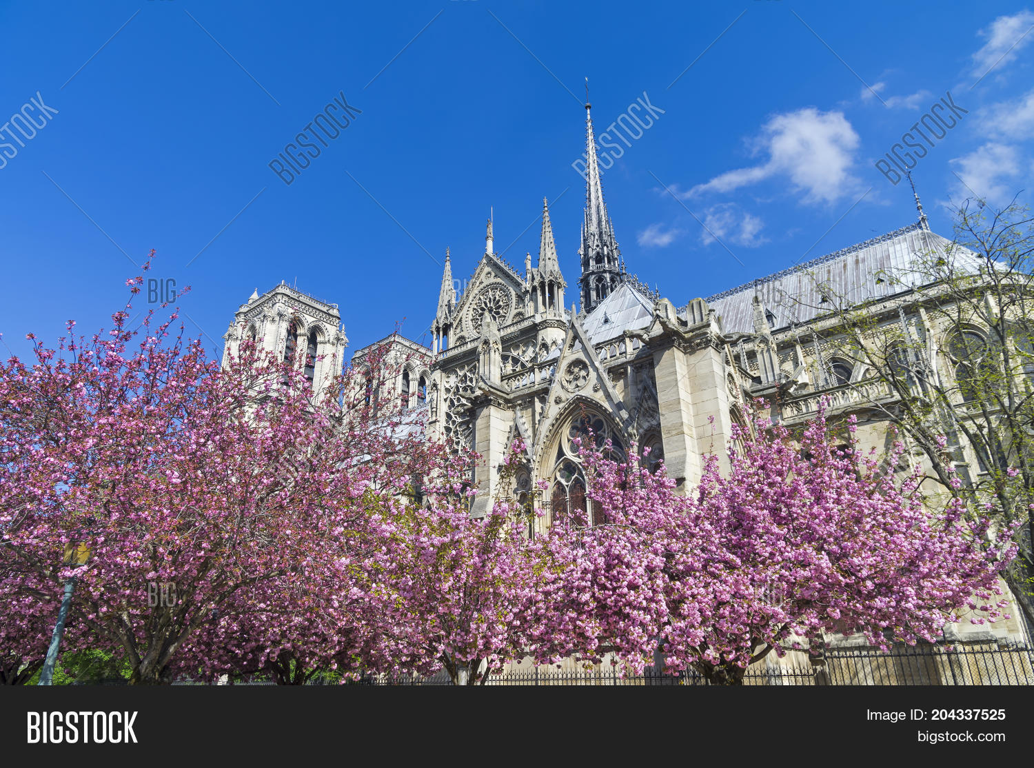 Flowering trees judas image photo free trial bigstock flowering trees judas tree on the background of notre dame cathedral a sunny izmirmasajfo