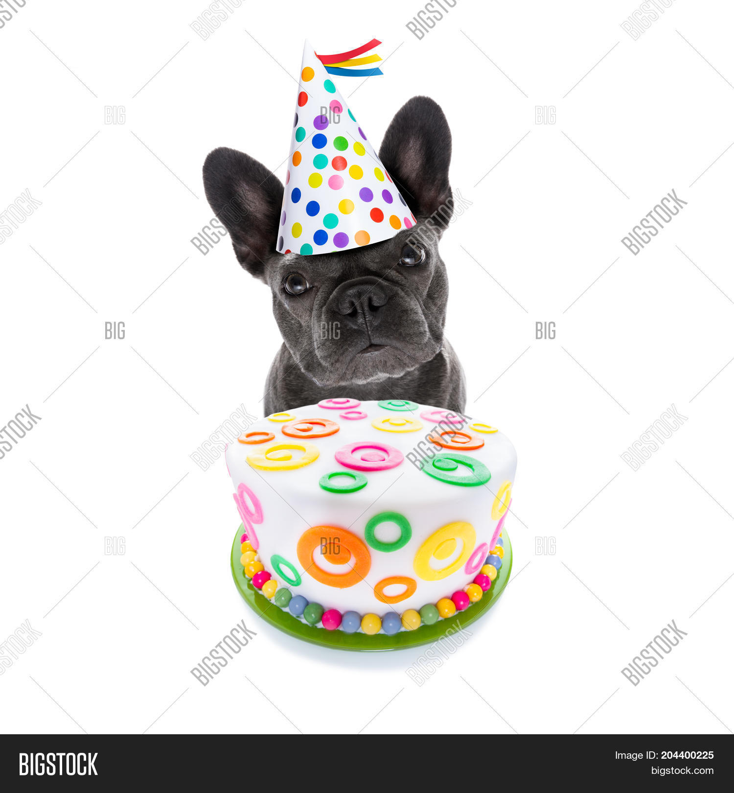 French Bulldog Dog Hungry For A Happy Birthday Cake Wearing Party Hat Isolated On White Background