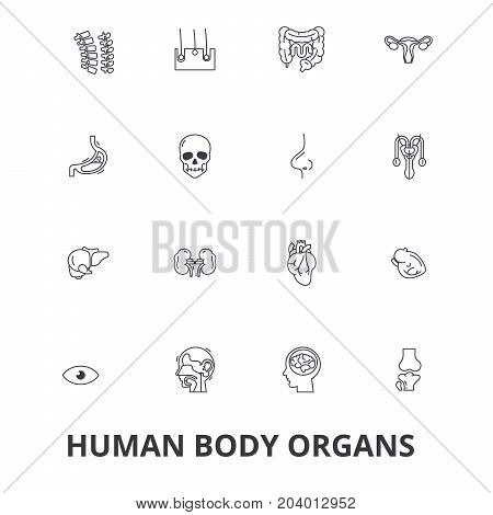 Human body organs, human body, medical, human anatomy, body system, body part line icons. Editable strokes. Flat design vector illustration symbol concept. Linear signs isolated on white background