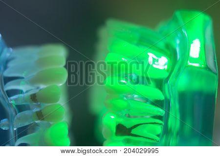 Dental Teeth Jaw Model