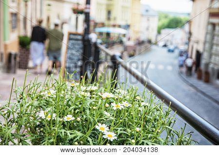 Flowerpot with daisies in main street in old mining town Banska Stiavnica Slovak republic Unesco. Travel destination. Urban scene.