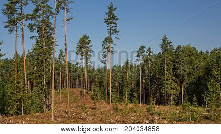 The environmental problem of deforestation. Part of the forest, which produced deforestation.
