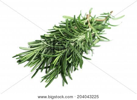 Herb plant fresh basil fennel leek set