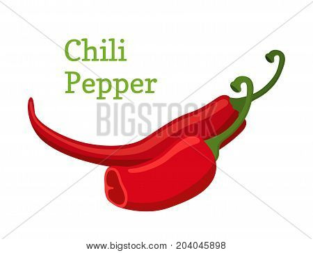 Red chili pepper, hot spicy pepper. Made in cartoon flat style. Vector illustration