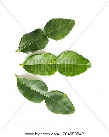 aromatic, asia, asian, background, beautiful, beauty, citrus, clipping, close, closeup, edible, flavour, food, fresh, fruit, green, health, healthy, herb, herbal, ingredient, isolated, kaffir, leaf, lemon, lime, medicine, natural, nature, nobody, nutritio