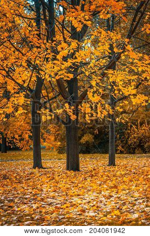 Autunm Tree In The Park, Perfect Fall Scenery