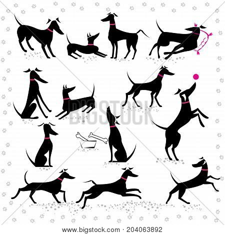 Set of silhouettes italian greyhounds in different poses