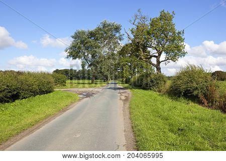 Country Road And Old Trees