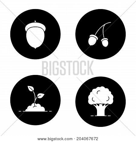 Forestry glyph icons set. Oak tree and fruit, growing sprout. Vector white silhouettes illustrations in black circles