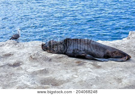 Gull and sea lion on seashore in Argentina